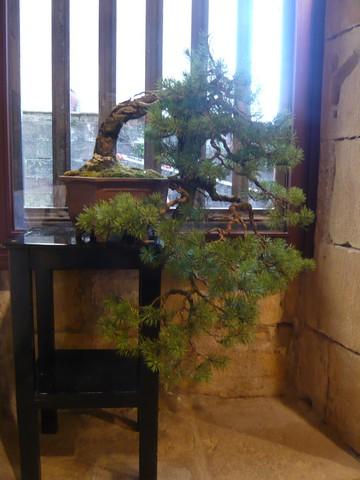 IV. Exposicion de Bonsai y Suiseki de Hondarribia Image036