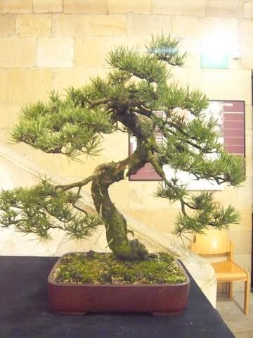 IV. Exposicion de Bonsai y Suiseki de Hondarribia Image037