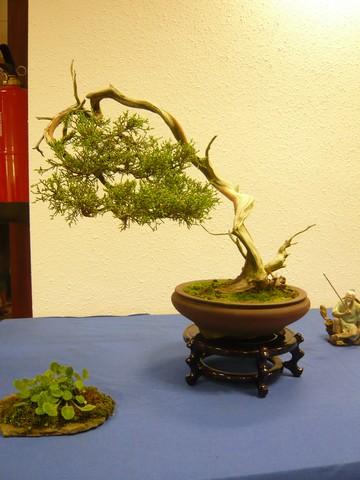 IV. Exposicion de Bonsai y Suiseki de Hondarribia Image040