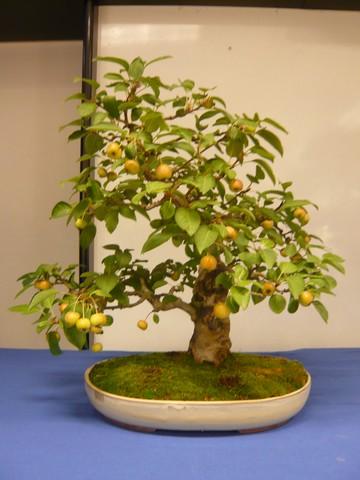 IV. Exposicion de Bonsai y Suiseki de Hondarribia Image042