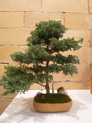 IV. Exposicion de Bonsai y Suiseki de Hondarribia Image043