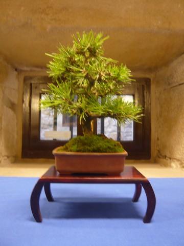 IV. Exposicion de Bonsai y Suiseki de Hondarribia Image044