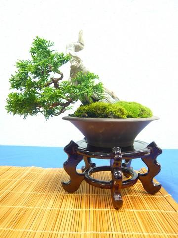 IV. Exposicion de Bonsai y Suiseki de Hondarribia Image045