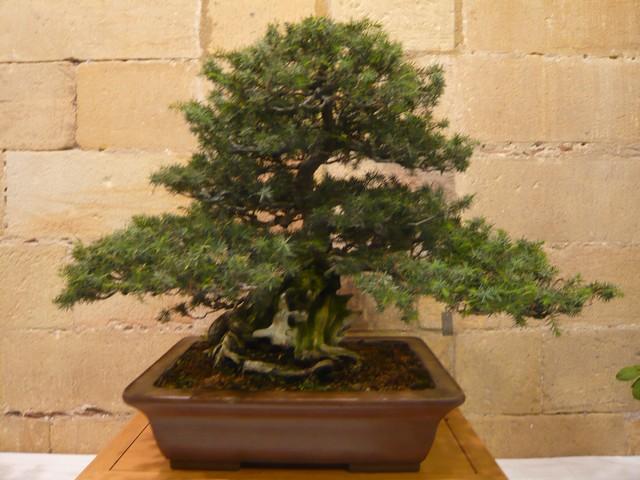 IV. Exposicion de Bonsai y Suiseki de Hondarribia Image046