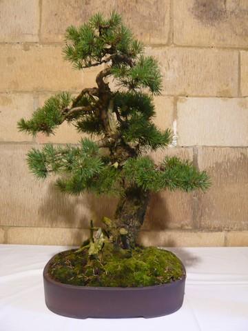 IV. Exposicion de Bonsai y Suiseki de Hondarribia Image047