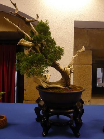 IV. Exposicion de Bonsai y Suiseki de Hondarribia Image048