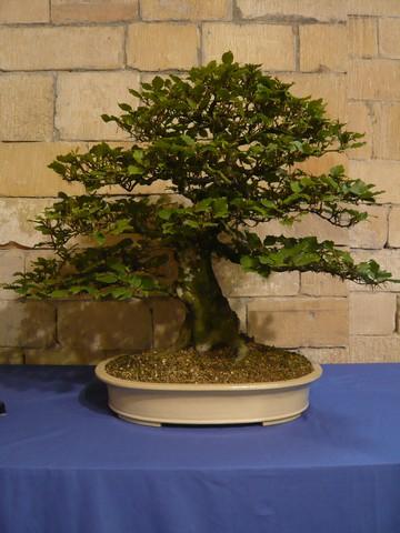 IV. Exposicion de Bonsai y Suiseki de Hondarribia Image051