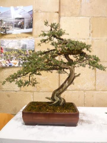 IV. Exposicion de Bonsai y Suiseki de Hondarribia Image052