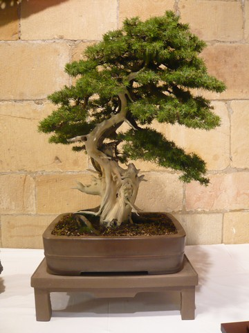 IV. Exposicion de Bonsai y Suiseki de Hondarribia Image053