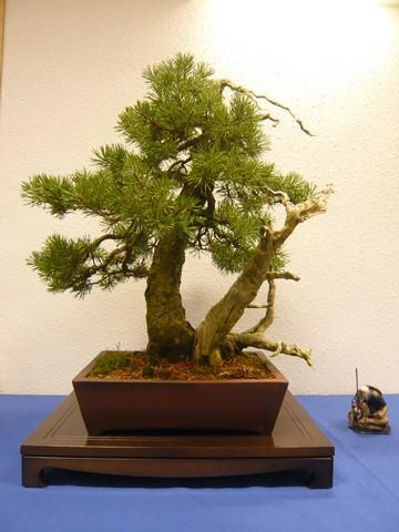IV. Exposicion de Bonsai y Suiseki de Hondarribia Image054