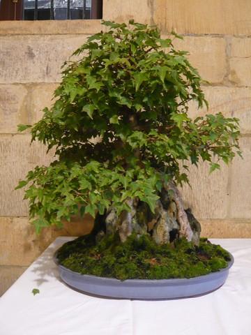 IV. Exposicion de Bonsai y Suiseki de Hondarribia Image055