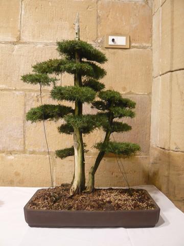 IV. Exposicion de Bonsai y Suiseki de Hondarribia Image056