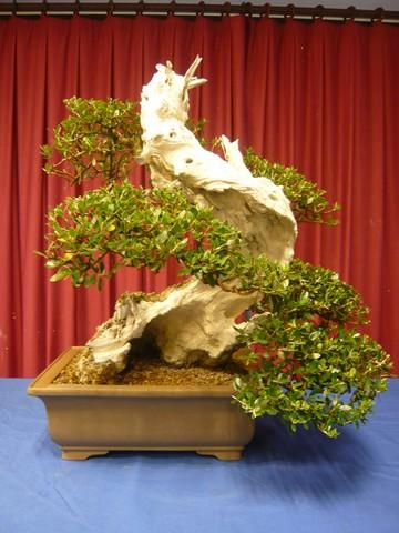 IV. Exposicion de Bonsai y Suiseki de Hondarribia Image058