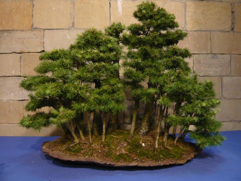 IV. Exposicion de Bonsai y Suiseki de Hondarribia P1020910