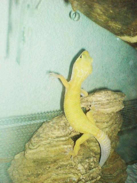 toute notre tribu de reptiles... Dsc00411