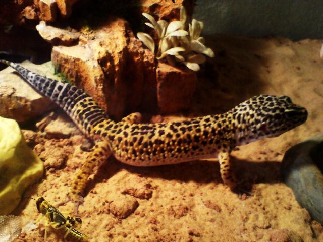 toute notre tribu de reptiles... Dsc01015