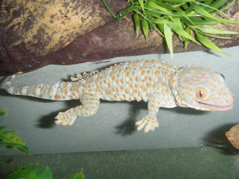 toute notre tribu de reptiles... Dscf1511