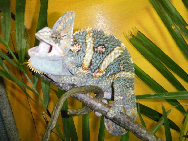 toute notre tribu de reptiles... Dscf2116