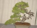 expo 2009 de la SBPQ Sany1115