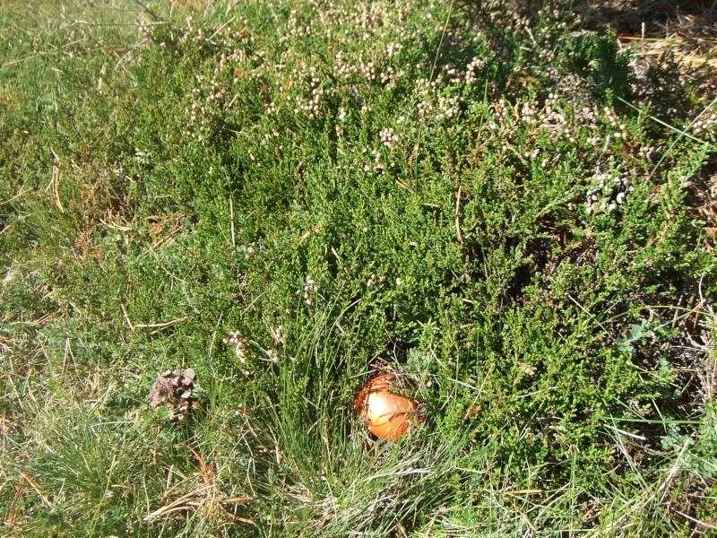 Les champignons de mon département Dscf7710
