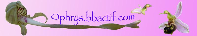 Je sollicite votre aide pour un choix de bandeau d'ophrys Fise_n10