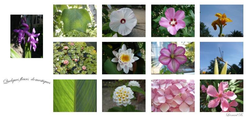 Fleurs de jardin et Phalaenopsis Fleurs10