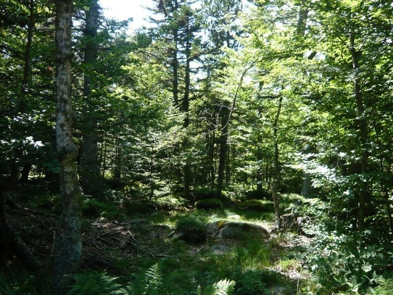 Balade au Col de Jau (66) aout L1150111