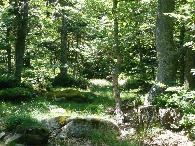 Balade au Col de Jau (66) aout L1150112