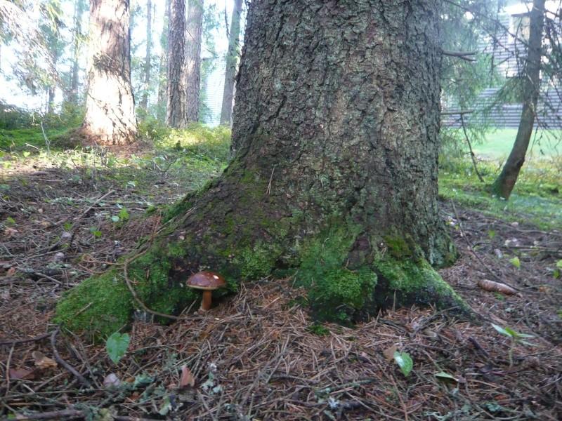 Les champignons de mon département L1160010