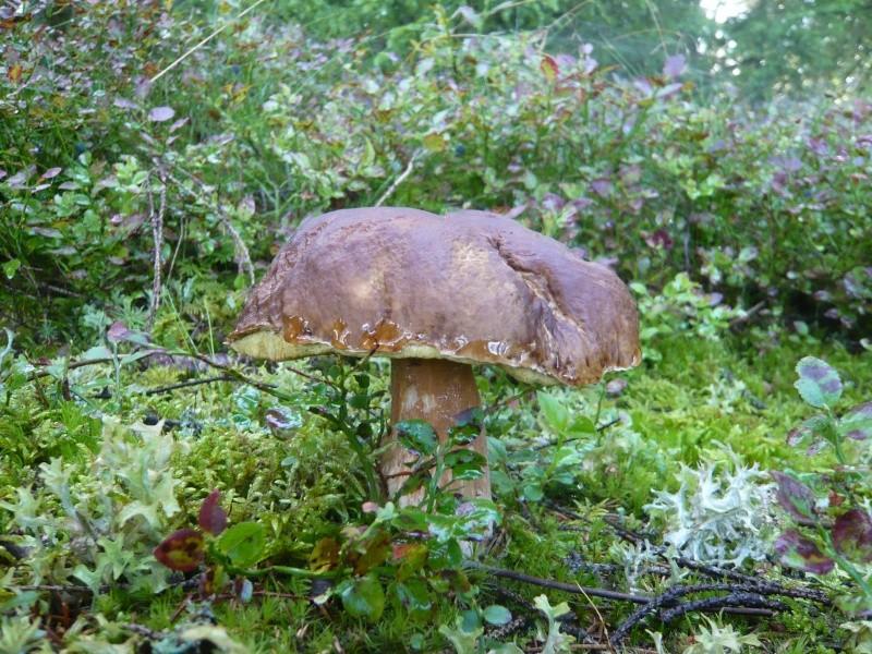 Les champignons de mon département L1160011