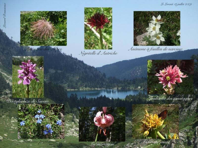 Quelques fleurs sauvages Le_lor10