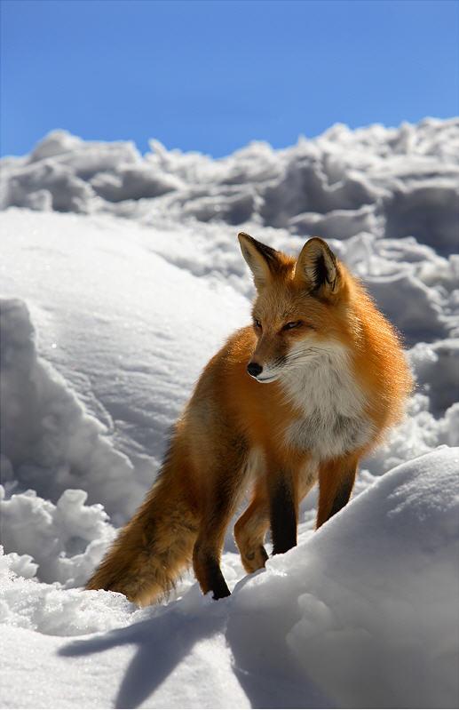Belles images d'animaux 12059010