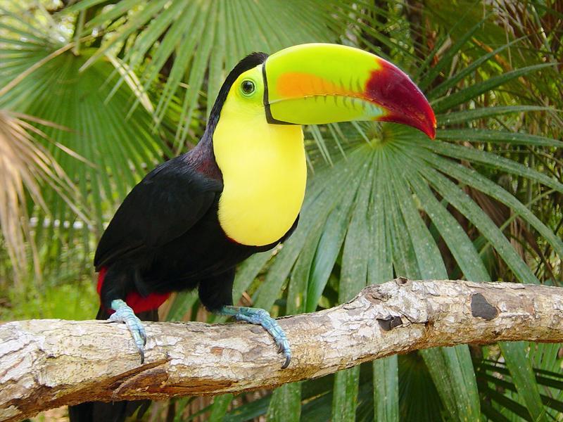 Belles images d'animaux 12075610