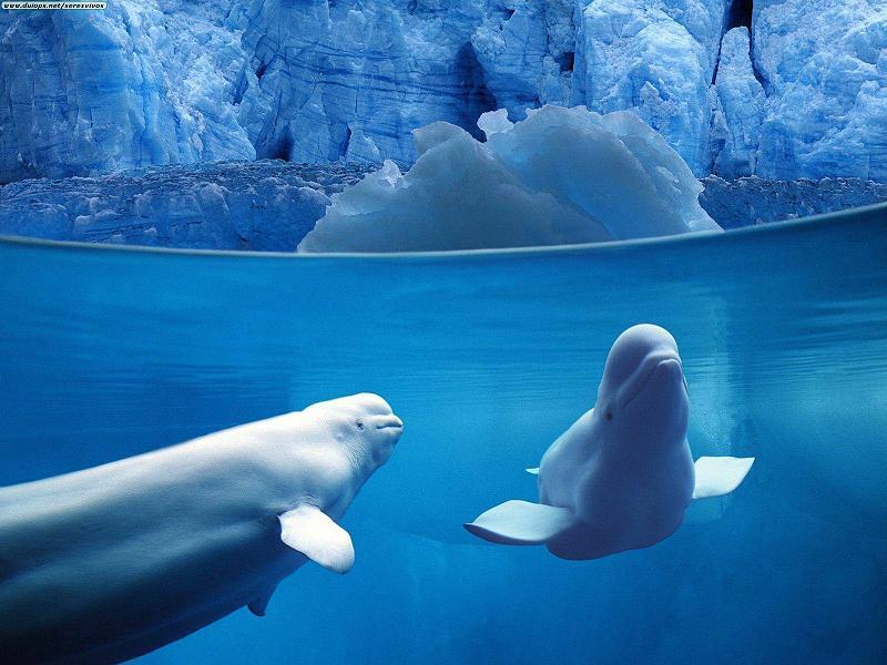 Belles images d'animaux 12076010