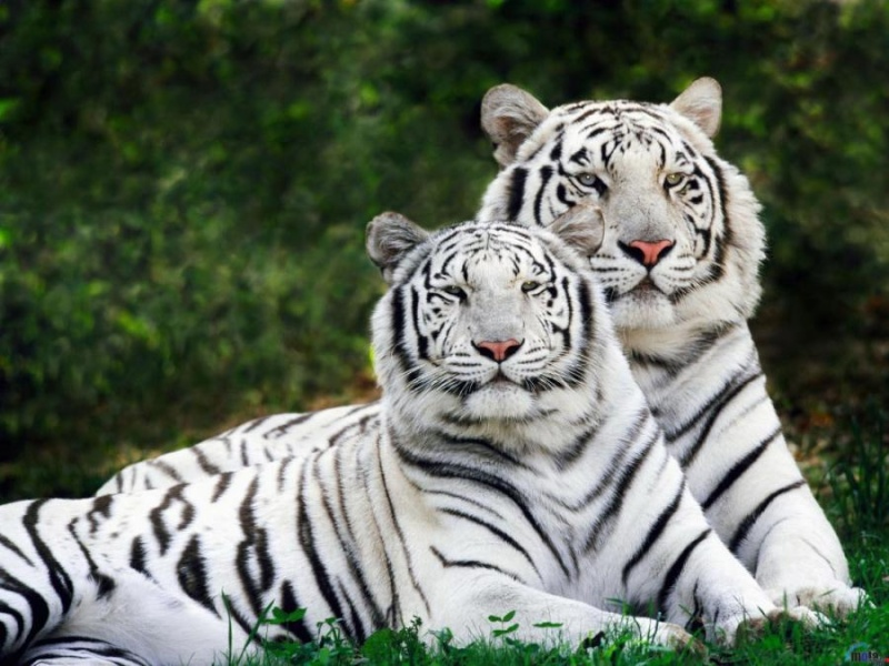 Belles images d'animaux 12077910