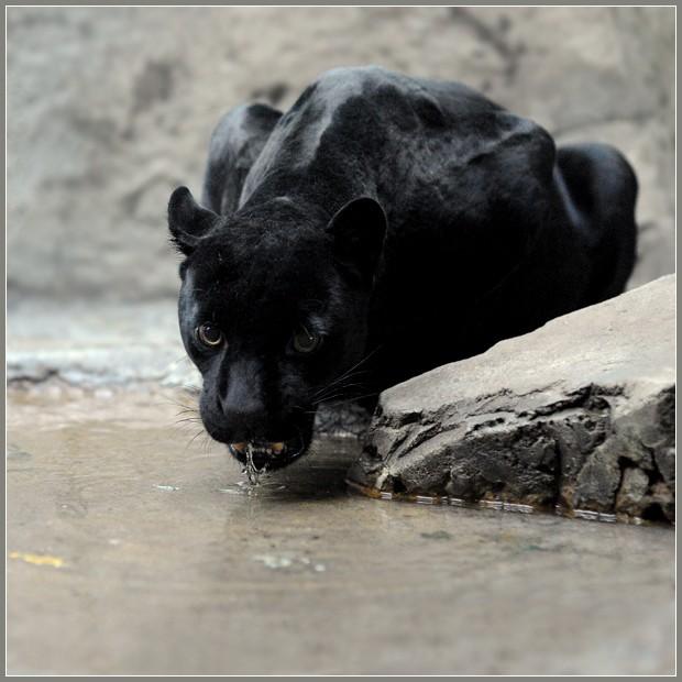 Belles images d'animaux 4r6njk10