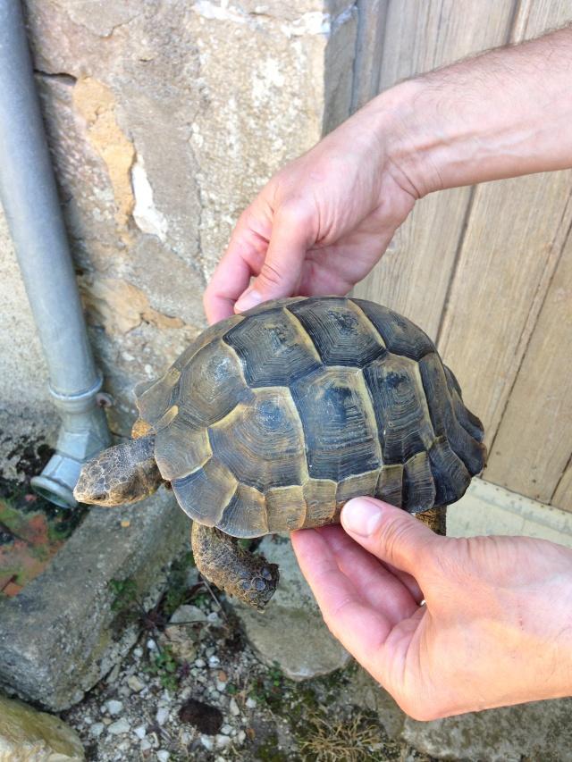 J'ai failli avoir une nouvelle tortue^^ Img_0213