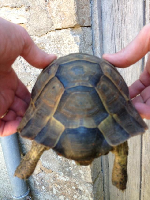 J'ai failli avoir une nouvelle tortue^^ Img_0215
