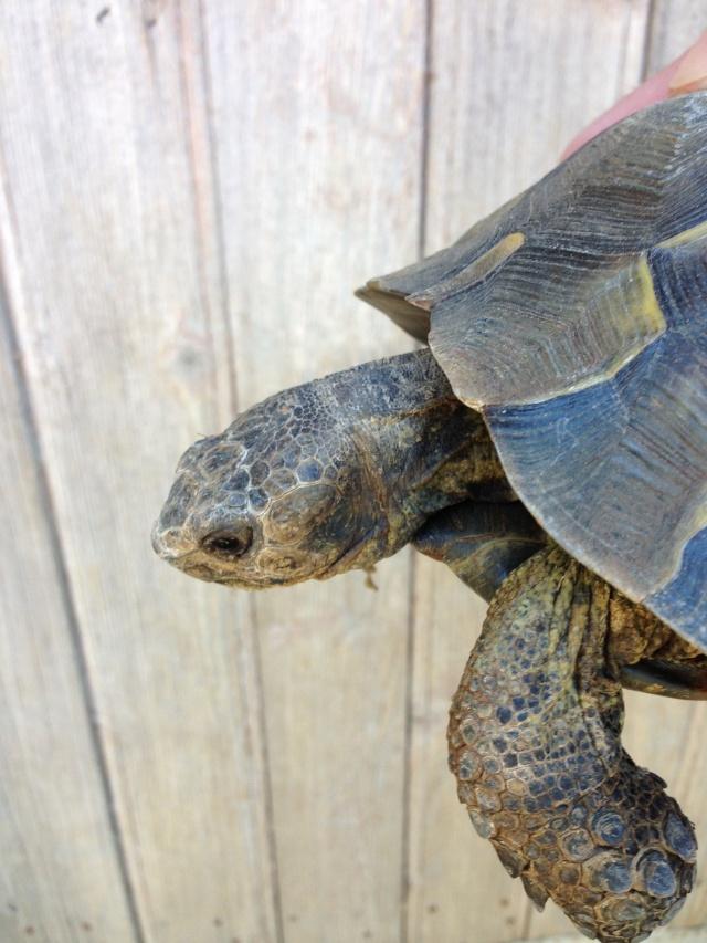 J'ai failli avoir une nouvelle tortue^^ Img_0216