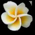 demande personnalisation du theme hawaï I_fold14