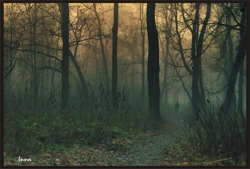 Лес Тёмный X_da6910