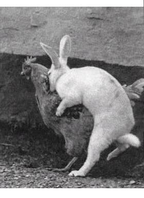 L'Amour des lapins Lapin_10
