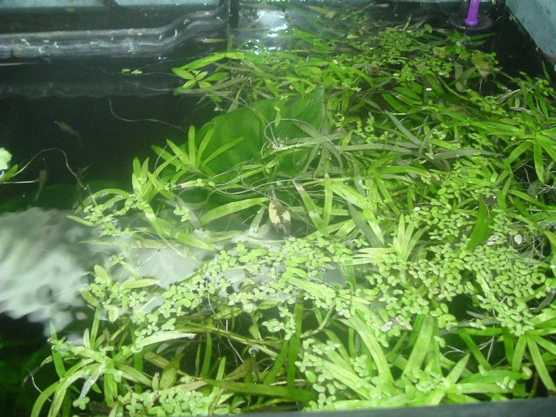 plantes en vrac Dscf2713