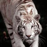 réchauffement climatique : animaux en danger !! Sans_t12