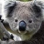 réchauffement climatique : animaux en danger !! Sans_t13