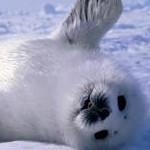 réchauffement climatique : animaux en danger !! Sans_t14