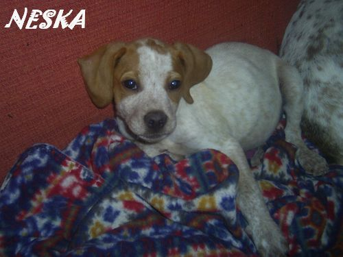 NESKA - en famille d'accueil dans le 77 - SC - VV RP O Pic_0013
