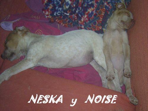 NESKA - en famille d'accueil dans le 77 - SC - VV RP O Pic_0014