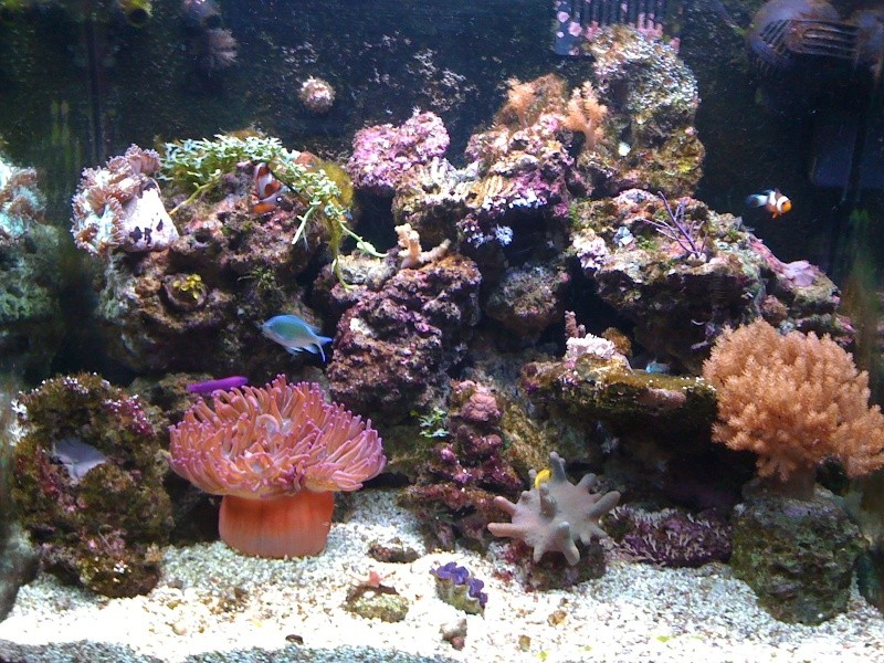 red sea 130 Img_0116