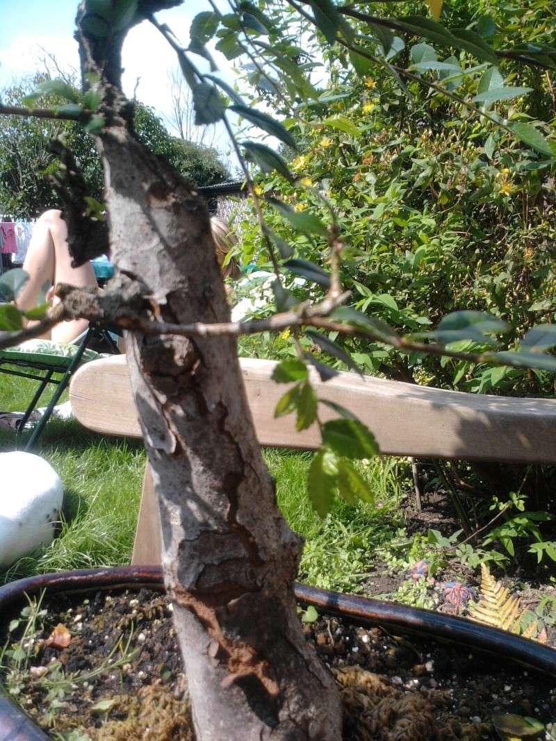 peeling bark Photo010